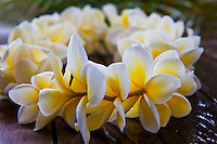 White and yellow plumeria lei