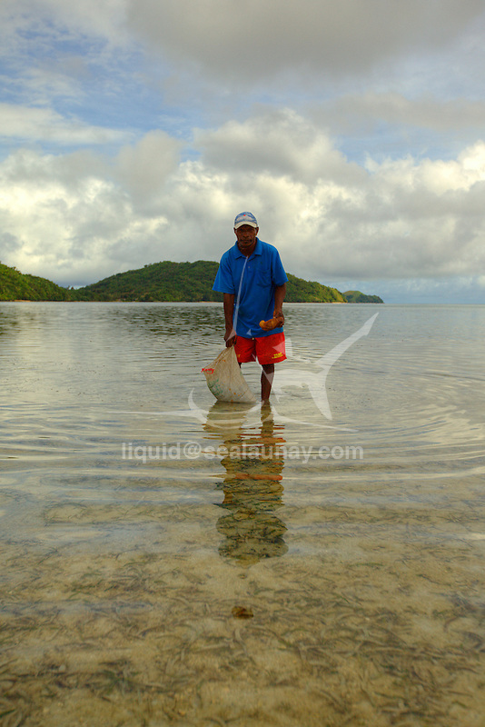 A man harvesting sea cucumbers in the village of Hessessai Bay at PanaTinai (Panatinane)island in the Louisiade Archipelago in Milne Bay Province, Papua New Guinea.  The island has an area of 78 km2..The Louisiade Archipelago is a string of ten larger volcanic islands frequently fringed by coral reefs, and 90 smaller coral islands located 200 km southeast of New Guinea, stretching over more than 160 km and spread over an ocean area of 26,000 km? between the Solomon Sea to the north and the Coral Sea to the south. The aggregate land area of the islands is about 1,790 km? (690 square miles), with Vanatinai (formerly Sudest or Tagula as named by European claimants on Western maps) being the largest..Sideia Island and Basilaki Island lie closest to New Guinea, while Misima, Vanatinai, and Rossel islands lie further east..The archipelago is divided into the Local Level Government (LLG) areas Louisiade Rural (western part, with Misima), and Yaleyamba (western part, with Rossell and Tagula islands. The LLG areas are part of Samarai-Murua District district of Milne Bay. The seat of the Louisiade Rural LLG is Bwagaoia on Misima Island, the population center of the archipelago.PanaTinai (Panatinane) is an island in the Louisiade Archipelago in Milne Bay Province, Papua New Guinea. The island has an area of 78 km2..The Louisiade Archipelago is a string of ten larger volcanic islands frequently fringed by coral reefs, and 90 smaller coral islands located 200 km southeast of New Guinea, stretching over more than 160 km and spread over an ocean area of 26,000 km? between the Solomon Sea to the north and the Coral Sea to the south. The aggregate land area of the islands is about 1,790 km? (690 square miles), with Vanatinai (formerly Sudest or Tagula as named by European claimants on Western maps) being the largest..Sideia Island and Basilaki Island lie closest to New Guinea, while Misima, Vanatinai, and Rossel islands lie further east..The archipelago is divided into the Local Lev