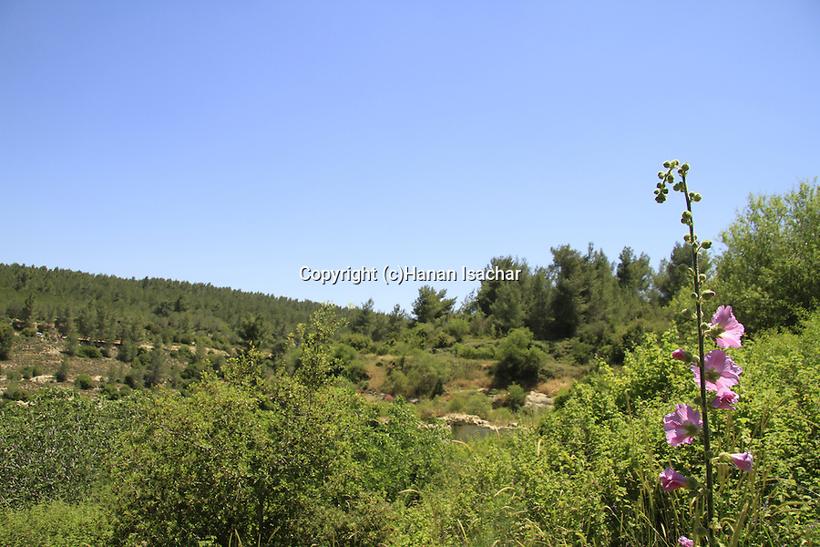 Israel, Jerusalem mountains, a view of Nahal Ktalav