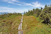 Appalachian Trail - Alpine/subalpine bog on the summit of Mount Success in Success, New Hampshire.