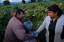 Workers at the Intermed 1 Ltd. distill roses into rose oil and roses. The Rose valley in Bulgaria is one of the world's main producers of roses (for rose oil and rose water products) which are harvested in the Rose Valley during the period of mid May to mid June.