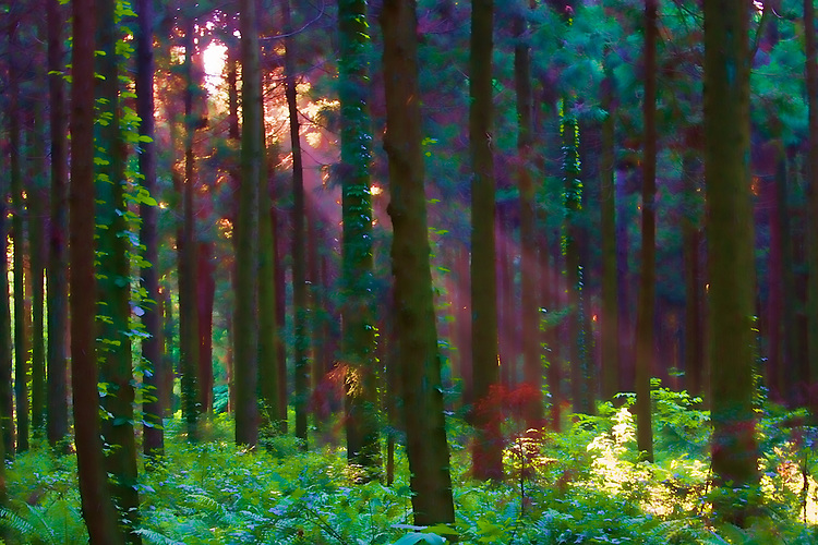 Sunset beaming through the trees in a peaceful part of the forest in northern Japan