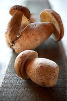 Fresh woodland Ceps - wild mushrooms
