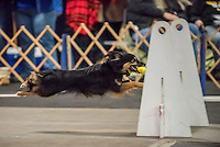 2016 2 fast Fur U Santa Paws Flyball Tournament held at Finger Lakes Pet Resort in Farmington NY