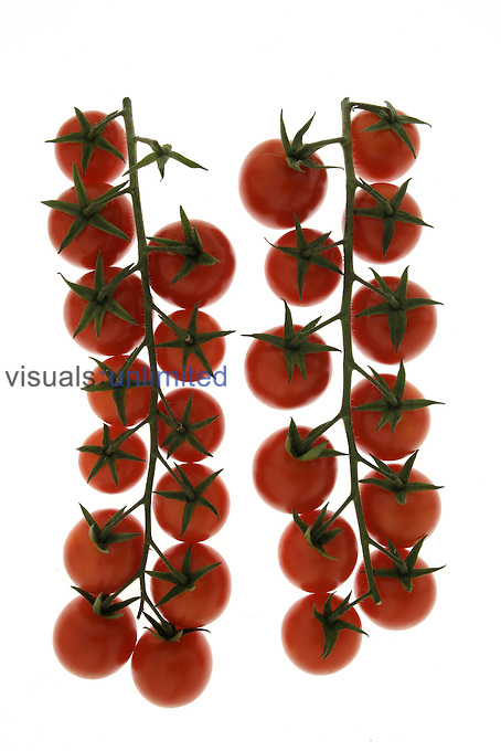 Tomatoes pink, yellow, orange, striated flat and pear. Institute experimental industrial Montenaso culture.