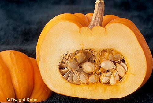 HS24-137b  Pumpkin - cx showing seeds