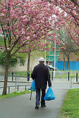 An elderly Bangladeshi man carries his shopping home beneath pink tree blossom in Whitechapel, London Borough of Tower Hamlets.