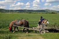 ROMANIA Transilvania  / RUMAENIEN Transsilvanien Siebenbuergen, Pferewagen bei Voila