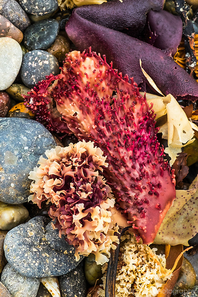 Colorful ocean plans washed up on rocky shore
