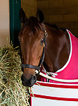 DEL MAR, CA - NOVEMBER 02: Itsinthepost, owned by Red Baron's Barn LLC and trained by Jeff Mullins, in their barn after exercising in preparation for Longines Breeders' Cup Turf at Del Mar Thoroughbred Club on November 2, 2017 in Del Mar, California. (Photo by Casey Phillips/Eclipse Sportswire/Breeders Cup)