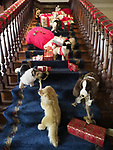 Old Westbury, New York, USA. December 17, 2017. At Winter Holiday event at Old Westbury Gardens museum, a stairway is strewn with stuffed animals looking as if they had spilled out of Santa's bag as he was heading up to the Children's Quarters on the Third floor.