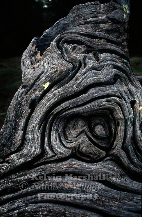 A natural sculpture formed from driftwood with twists, spirals, and knots.