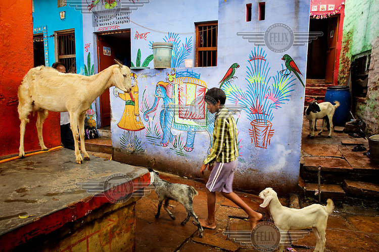 A boy walks past some goats and a colourful mural in one of the city's many alleyways.
