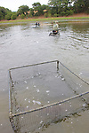 Pen with Earthwatchers Working In Background