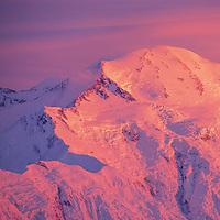 Pink Alpenglow On The North Face Of Mt. Denali Summit, Denali National Park, Alaska