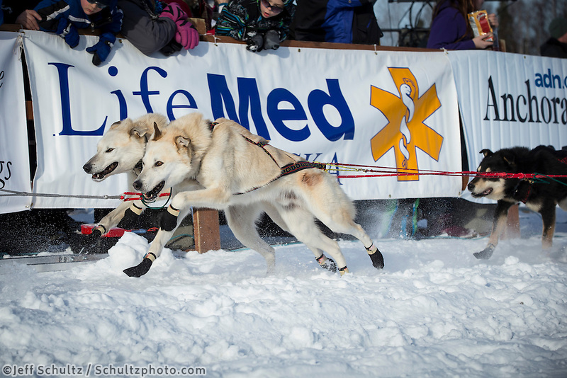 Jerry Sousa's dogs lean into their harnesses as he leaves the start line on Willow Lake during the re-start of the Iditarod sled dog race Sunday, March 3, 2013.  .
