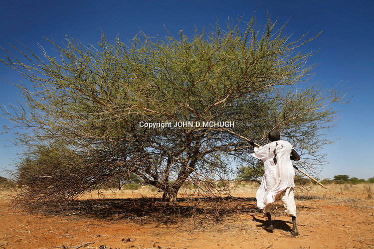 A Darfuri gum tree farmer works near Klaimendo village in North Darfur, 05 Dec, 2008. Despite the fact that North Darfur is believed to currently have the highest concentration of NGOs in the world, the creation of Klaimendo district and village is the work of people born and raised in the area, rather than an outside aid agency. (John D McHugh)