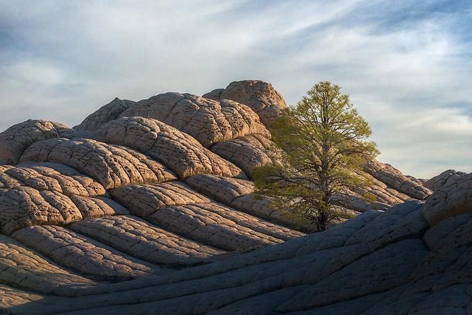 A lone tree amidst unique sandstone striations in the Vermillion Cliffs Wilderness.