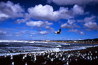 Flock of gulls in foreground of Seaside beach, Oregon