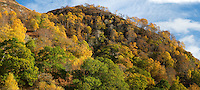 Autumn trees in Achnacairn, Scotland
