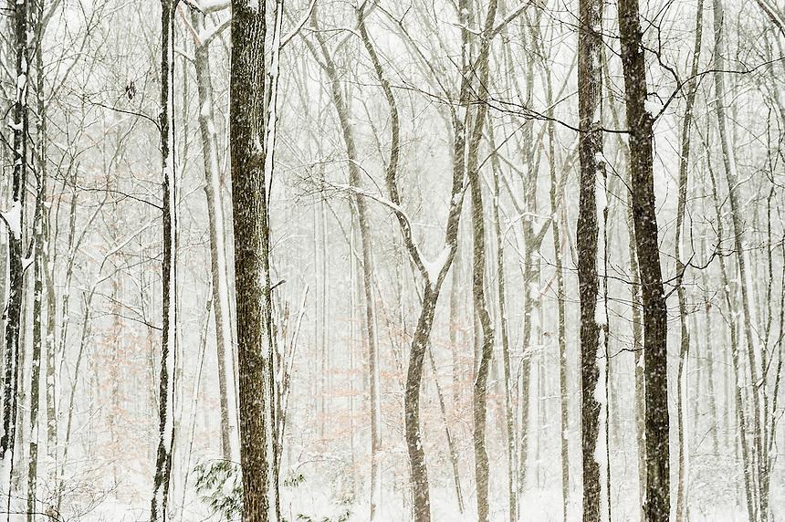Woodland snow fall.