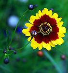 High-Contrast Botanicals
