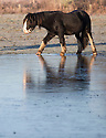 05/01/17<br /> <br /> A horse looks like a first-time ice-skater as it struggles to stand on frozen flood water in its field near Breadsall, Derbyshire.<br /> <br /> All Rights Reserved F Stop Press Ltd. (0)1773 550665   www.fstoppress.com