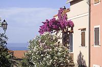 - Capraia island (Tuscan Archipelago), houses of the village<br /> <br /> - isola di Capraia (Arcipelago Toscano), case del paese