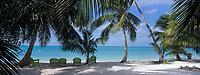 Iles Bahamas /Ile d'Andros/South Andros: la plage et les palmiers de l'Eco-Lodge - Tiamo Resorts - Vue sur l'océan Atlantique