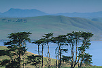 Monterey Cypress Trees (Cupressus macrocarpa) and hills aboveTomales Bay, Point Reyes Saeashore, Marin, California