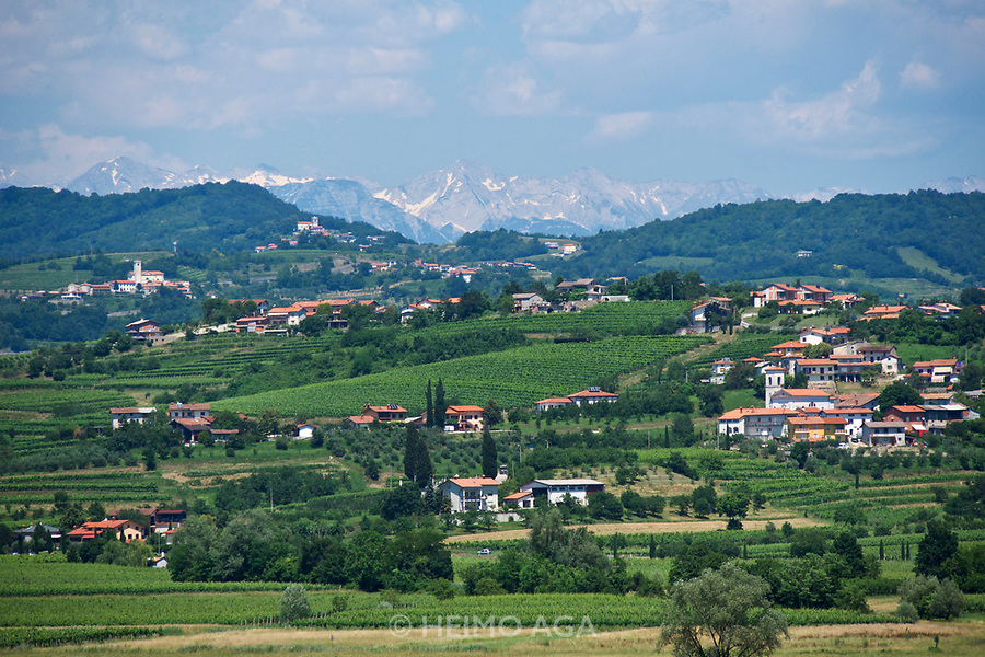 Italy, Collio. View towards the Alps.