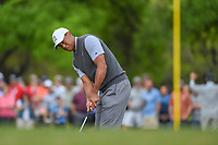 Tiger Woods (USA) watches his putt on 1 during day 3 of the WGC Dell Match Play, at the Austin Country Club, Austin, Texas, USA. 3/29/2019.<br /> Picture: Golffile | Ken Murray<br /> <br /> <br /> All photo usage must carry mandatory copyright credit (© Golffile | Ken Murray)