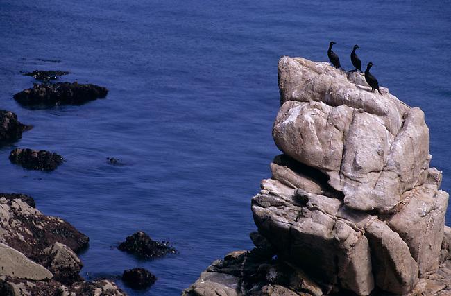 Cote decoupee de l'Ile de Brehat *** Rock on coastline, Ile de Brehat, Brittany.