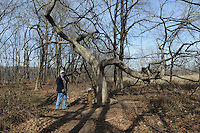 NWA Democrat-Gazette/FLIP PUTTHOFF <br /> Stanfill shows one of his favorite trees Feb. 10 2017 on the one-half mile trail.