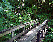 A graying, wooden bridge surrounded by woodland fauna leads you into the unknown via the path on the other side of the bridge. The bridge is typical of what most people see when walking in wooded areas, reserves, arboretums, etc.  and illicits memories of those peaceful times.