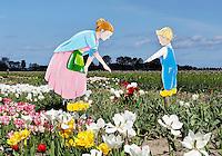 De Pluktuin in Lisse. Toeristen kunnen hier tegen betaling zelf tulpen plukken.