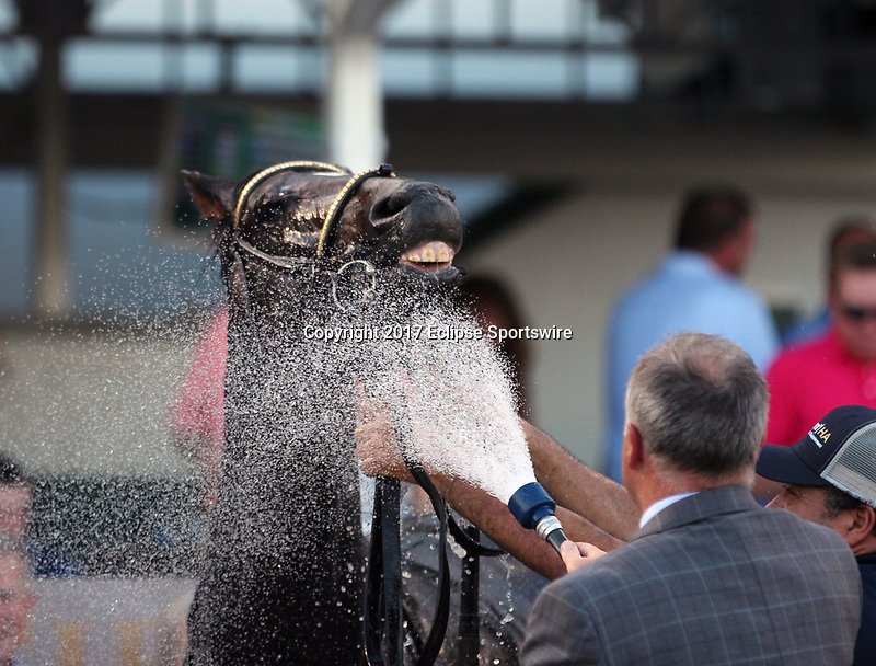 LOUISVILLE, KY - JUNE 17: McCraken gets a cool down on a hot night from trainer Ian Wilkes after winning the 20th running of the G3 Matt Winn at Churchill Downs, Louisville KY. Owner Whitham Thoroughbreds LLC (Janis R. Whitham), jockey Brian J. Hernandez Jr. By Ghostzapper x Ivory Empress (Seeking the Gold.) (Photo by Mary M. Meek/Eclipse Sportswire/Getty Images)