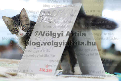 International cat show in Budapest, Hungary on October 04, 2015. ATTILA VOLGYI