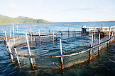 FRENCH POLYNESIA, Tahaa Island. A local fisherman in his fish pen along Tahaa Island.