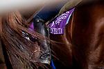 OCT 28: Zenyattas old saddle towel at Santa Anita Park in Arcadia, California on Oct 28, 2019. Evers/Eclipse Sportswire/Breeders' Cup