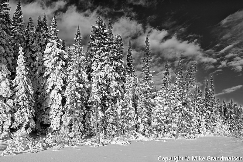 Boreal forest after a snow storm<br /> Duck Mountain Provincial Park<br /> Manitoba<br /> Canada