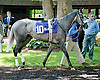 South Andros before The Justakiss Stakes at Delaware Park racetrack on 6/5/14