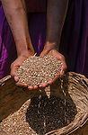 Seeds of millet collected in the Deccan development project seed saving scheme. This ensures not only  that  during times of famine that there is sufficient food available  but also  that the community  has rights to the seed stock as opposed to  large corporations buying up the rights.