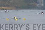Rowing at the regatta.in Killorglin on Saturday.   Copyright Kerry's Eye 2008