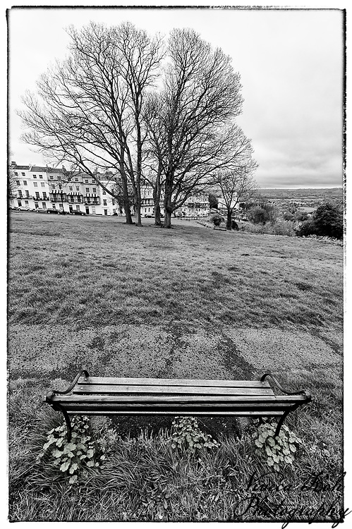 Tree and bench near Clifton Suspension Bridge, Bristol.