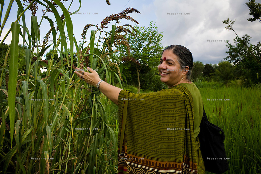 Dr. Vandana Shiva, founder of Navdanya Foundation and Bijavidyapeeth (College of Seeds) in Dehradun, Uttarakhand, India, inspects millet as she walks through her farm on 5th September 2009. Dr. Vandana Shiva is a physicist turned environmentalist who campaigns against genetically modified food and teaches farmers to rely on indigenous farming methods.. .Photo by Suzanne Lee / For The National