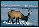 Wildlife.  5x7 Postcards. Frank Balthis