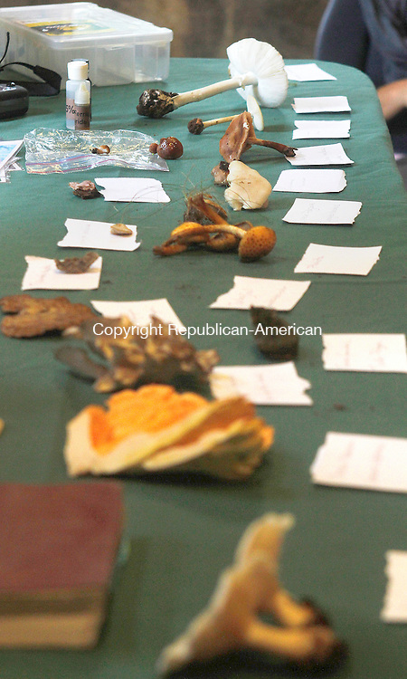 WOODBURY, CT.- 06 OCTOBER 2013 - 100613JW08 - A variety of mushrooms on display at the Flanders Nature Center program on harvesting wild mushrooms.<br /> Jonathan Wilcox Republican American