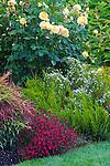 Vashon-Maury Island, WA<br /> Driscoll garden, layered border with flowering rose, heather, dianthus and nadina