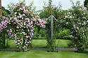 Rose Pergola, Upton Grey, mid July. Climbing roses are pink Rosa 'Blush Rambler' and white Rosa 'The Garland'.